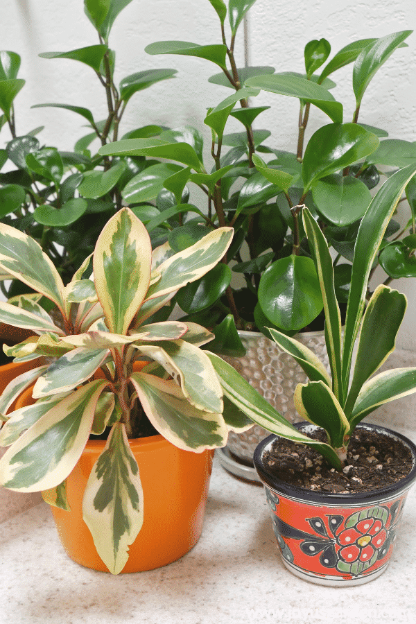 10 Stores Where You Can Buy Indoor Plants Online
