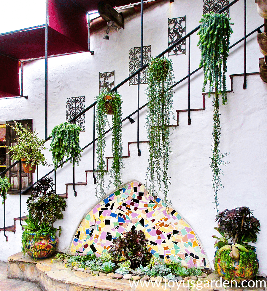 trailing Succulents in terra cotta pots in hang of a stair railing Old Town San Diego
