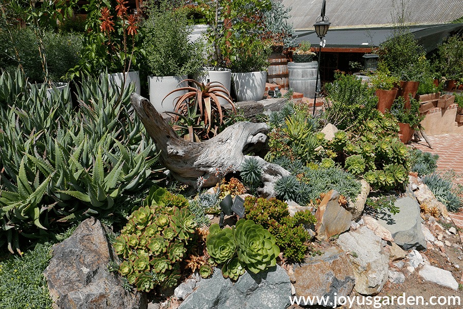 a mixture of colorful succulents grow in a rock garden at barrel & branches nursery