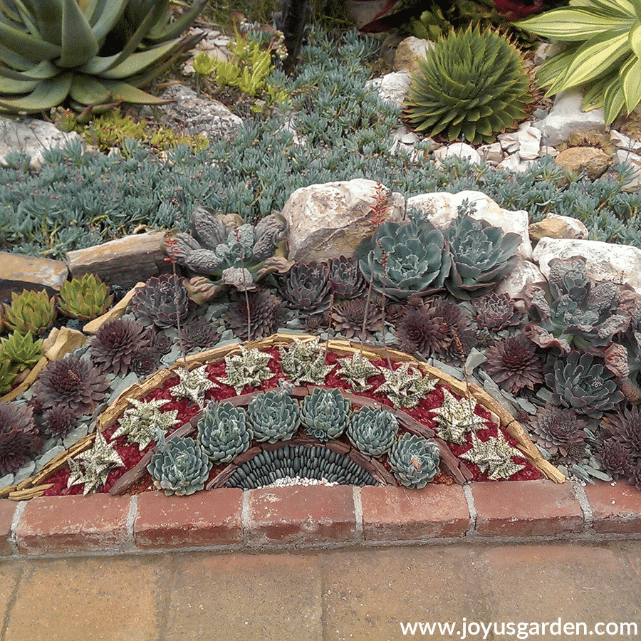 a colorful artful succulent garden at sherman library & gardens