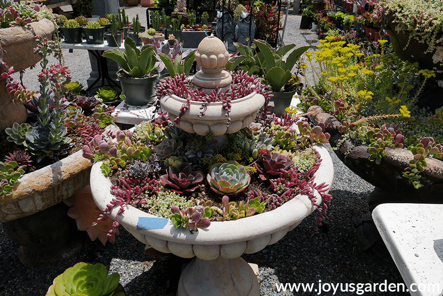 concrete fountains planted with beautiful succulents at cordova gardens