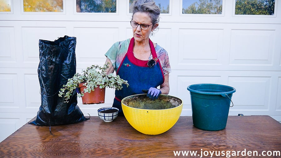 nell foster in a denim apron at a potting table holds a variegated succulent next to potting materials