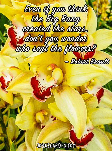 yellow cymbidium orchids with the quote even if you think the Big Bang created the stars, don't you wonder who sent the flowers