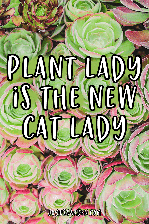 close up of red & green succulents with the quote plant lady is the new cat lady