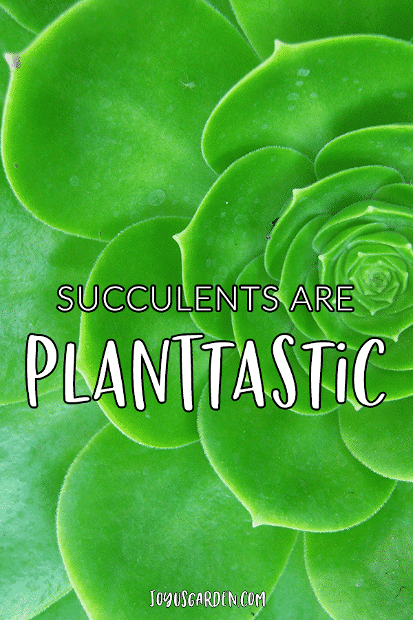 close up of a green aeonium with the quote succulents are plantastic