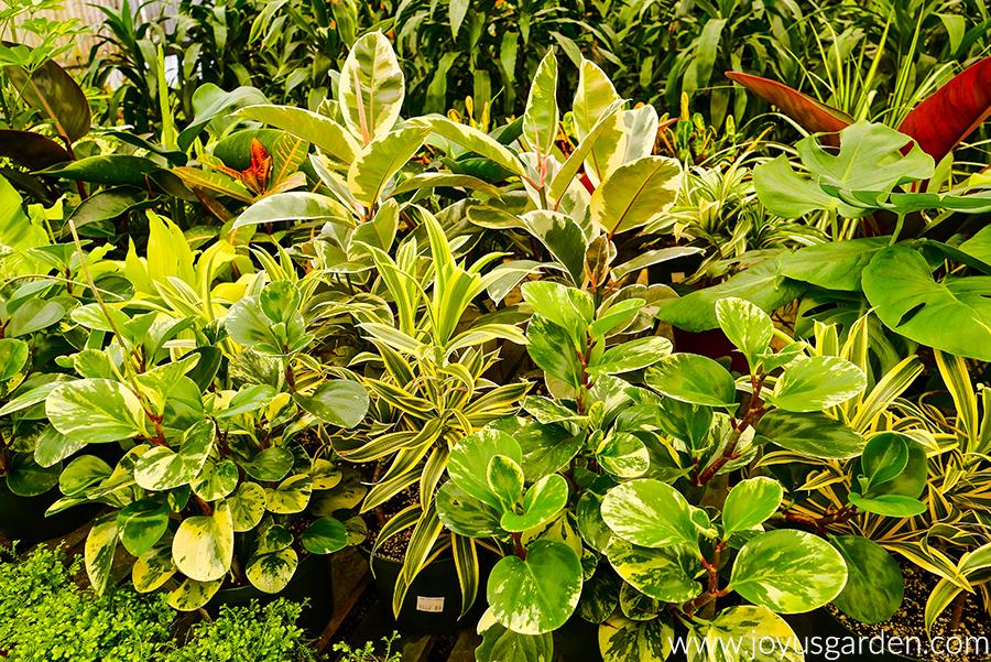houseplant assortment