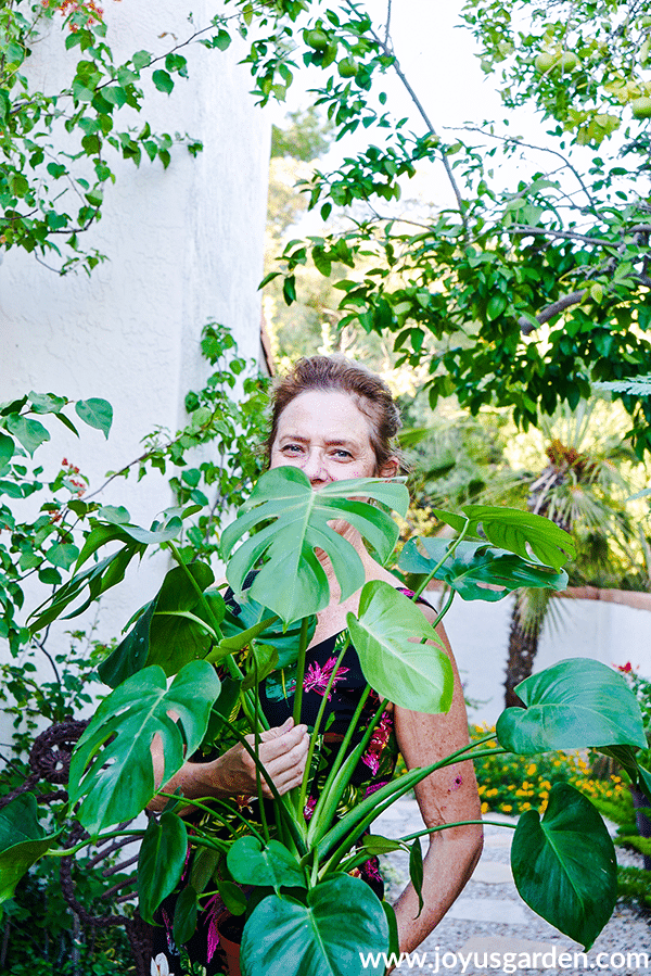 nell foster with joy us garden holds a monstera deliciosa plant
