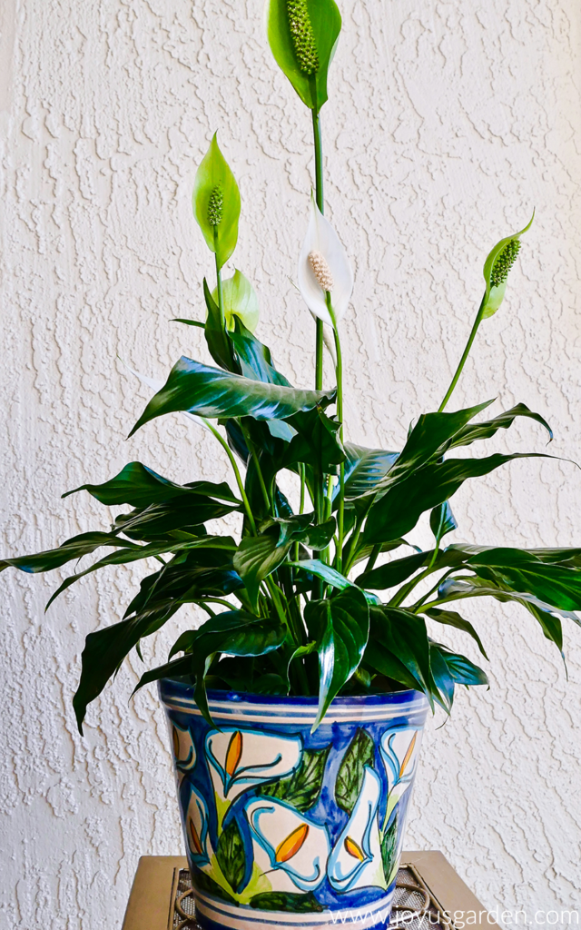 peace lily displayed in decorated plant