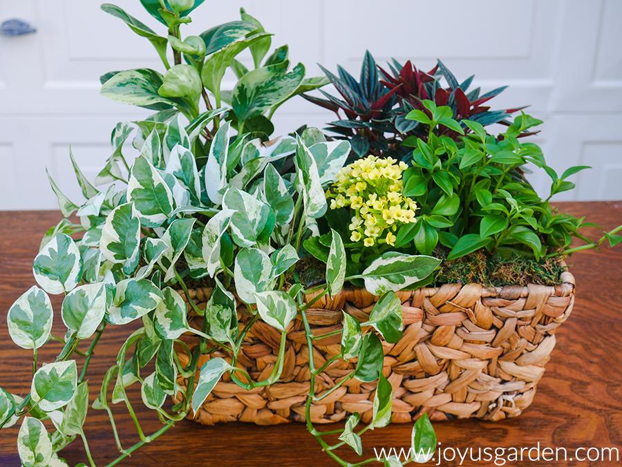 dish garden made of houseplants
