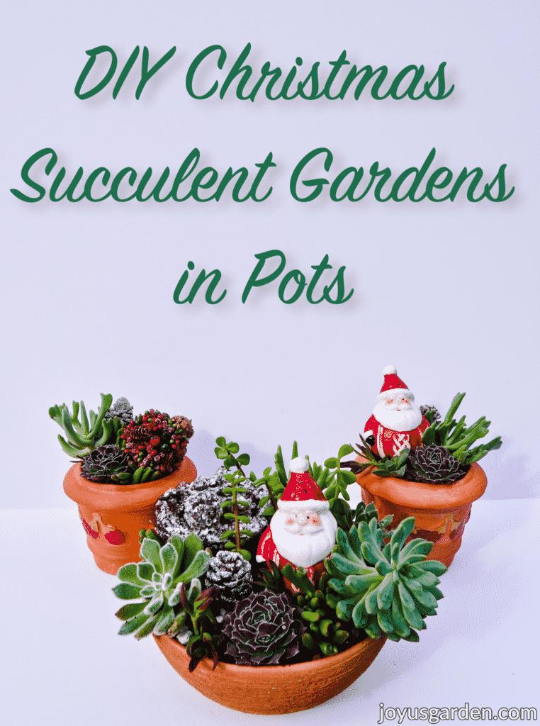 Christmas Succulent Arrangements In Pots: A Festive Succulent Garden DIY