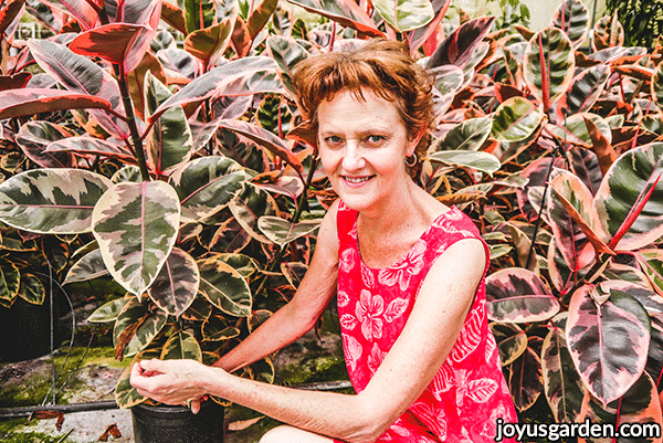 nell foster kneels in front of many pink & green ficus elastica rubberplant rubys