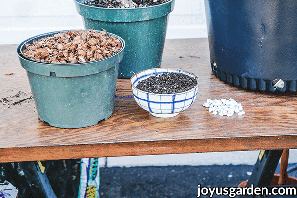 materials used for repotting a rubber plant ficus elastica