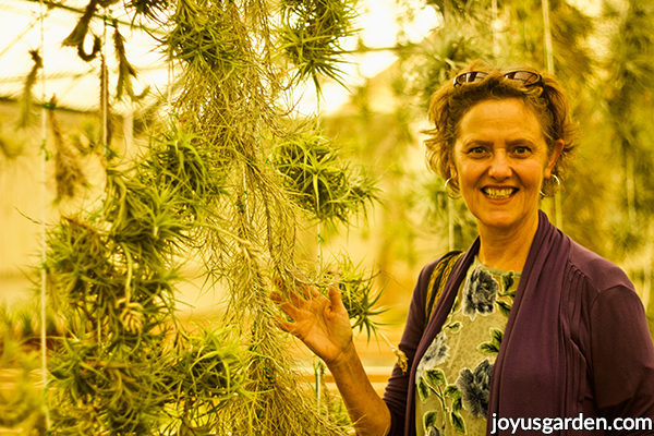 nell foster of joy us garden in a tillandsia air plant growers greenhouse next to hanging air plants