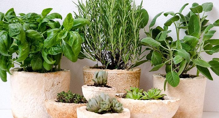 small cement containers in various sizes hold basil rosemary sage & succulents