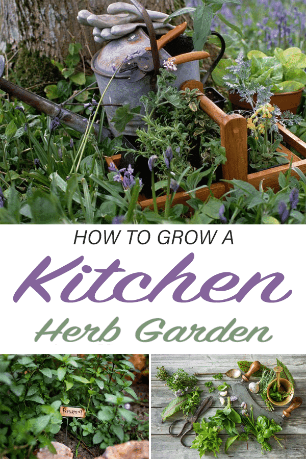 a collage with 3 pictures of herbs the text reads how to grow a kitchen herb garden
