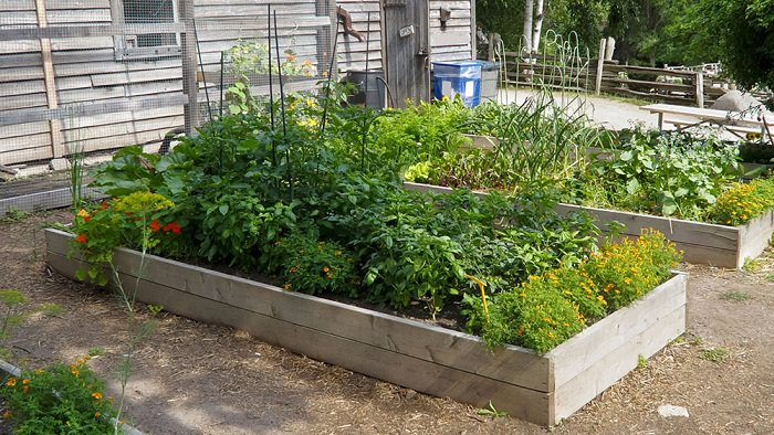2 wooden raised garden bed full of vegetables & herbs