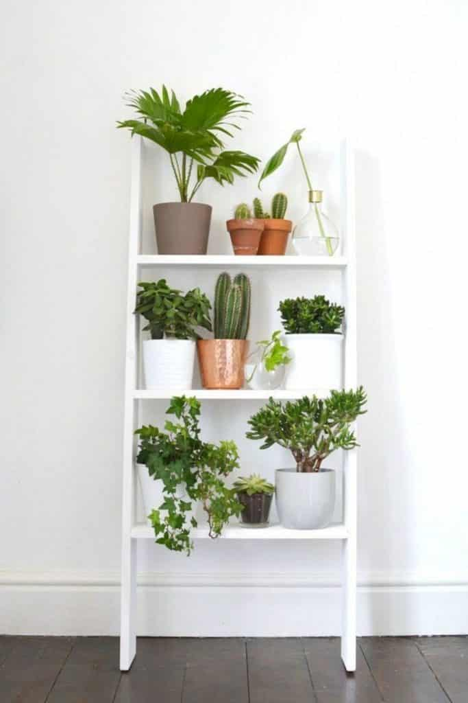 a white ladder leaning against the wall with houseplants on it