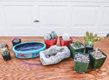 Gardening Guides & Tutorials