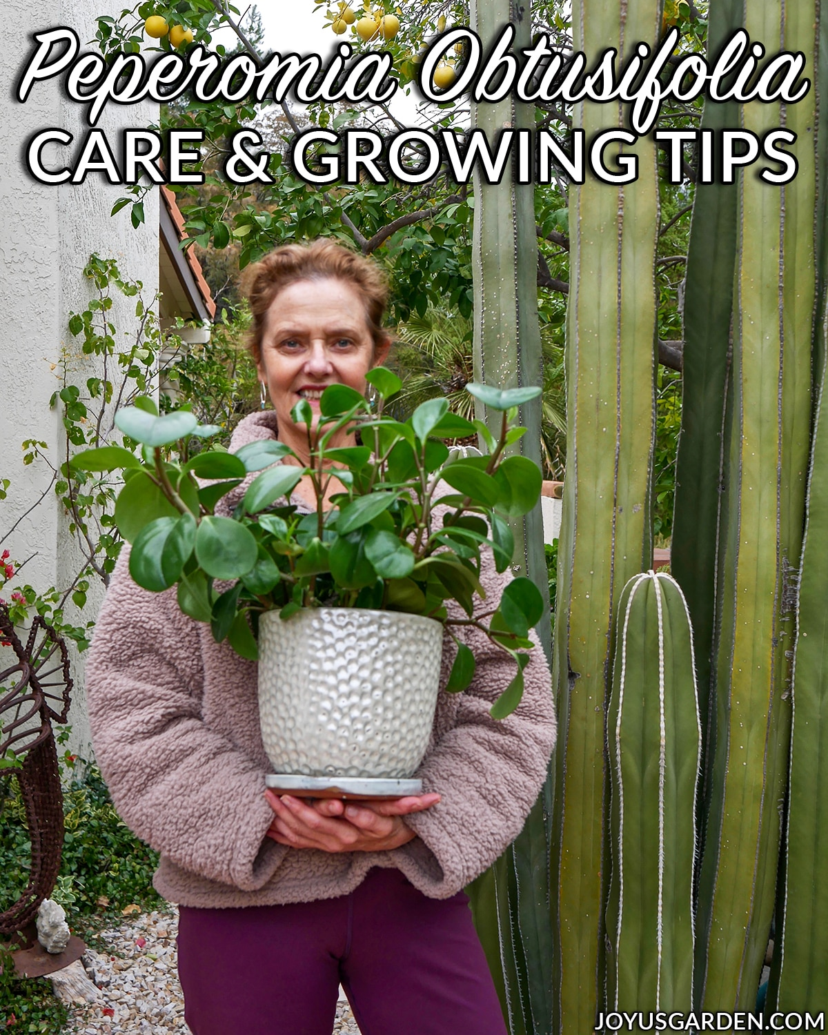 nell foster holds a peperomia obtusifolia baby rubber plant in a white ceramic next to a cactus