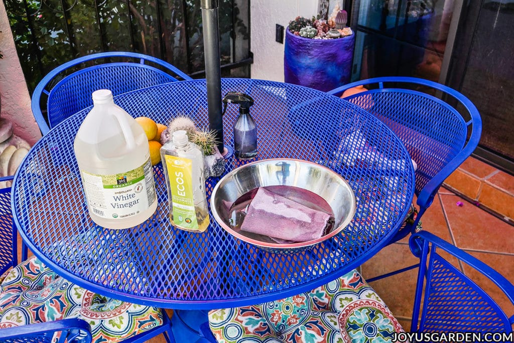 ingredients on a blue patio table used to clean houseplant leaves