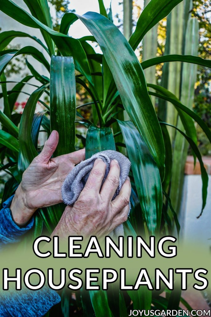Cleaning Houseplants: How & Why I Do It