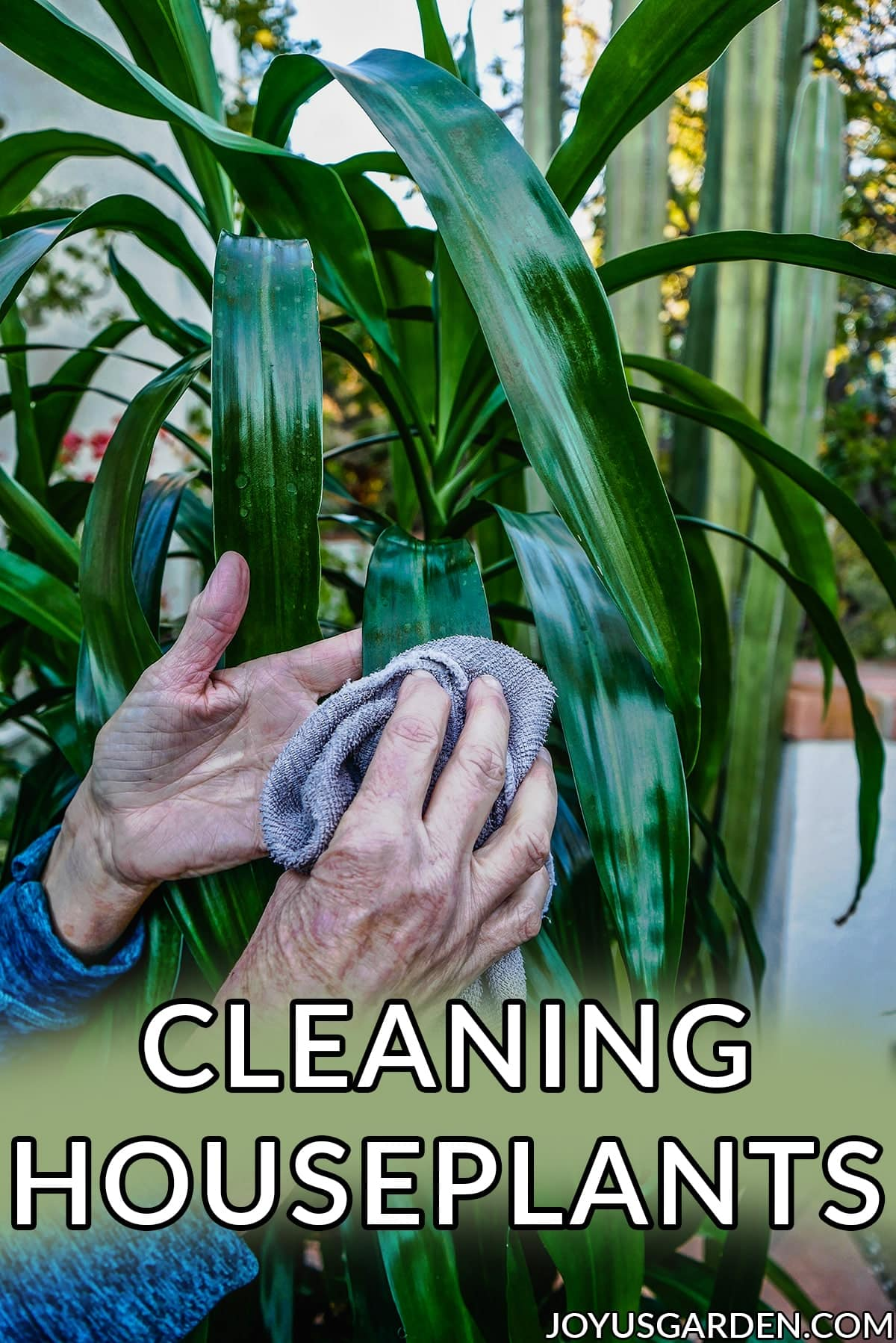 a hand with a cloth cleans a deep green houseplant the text reads cleaning houseplants