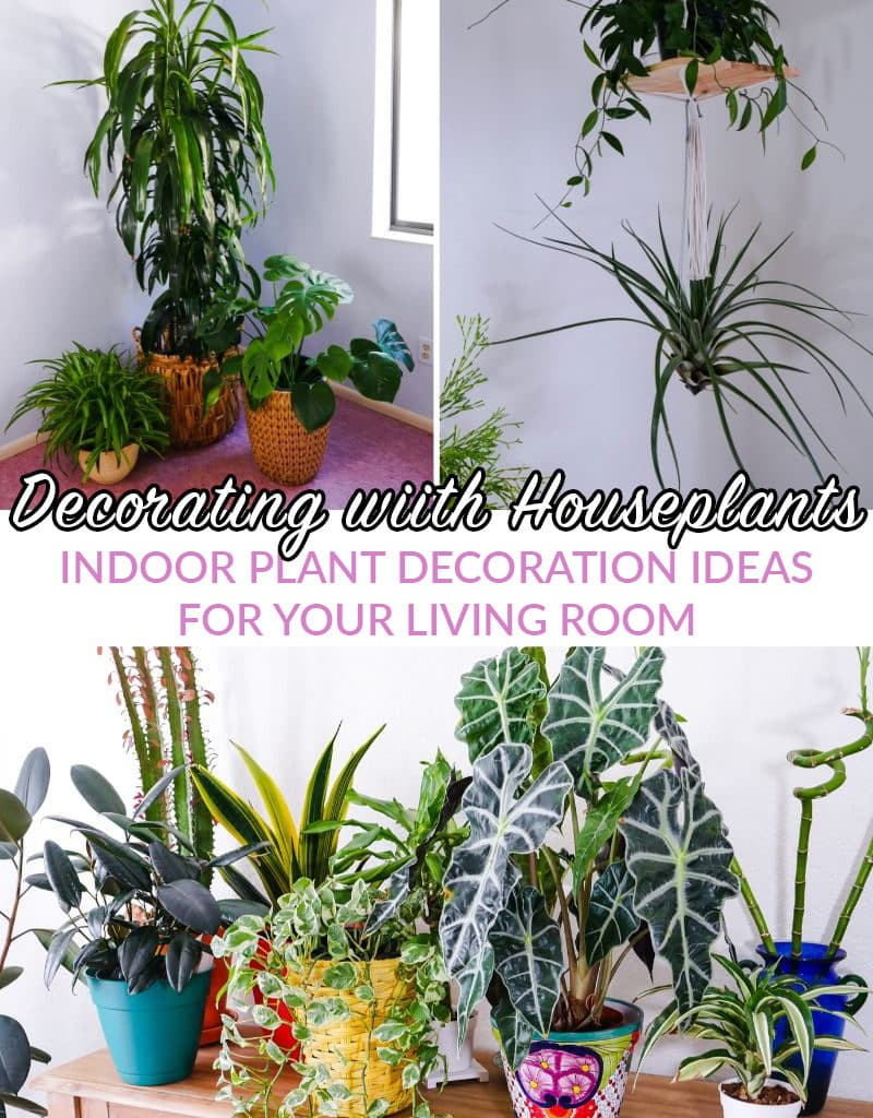 a collage with 3 photos of indoor plant decor the text reads decorating with houseplants indoor plant decoration ideas for your living room