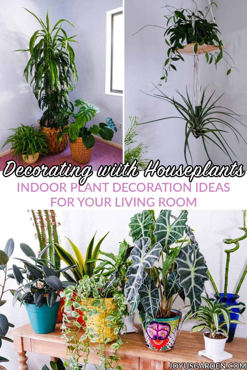 Decorating With Houseplants A Beginner S Guide Joy Us Garden