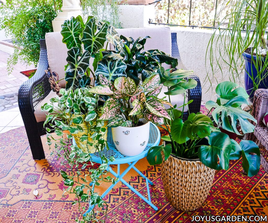 a grouping of tropical houseplants with beautiful foliage