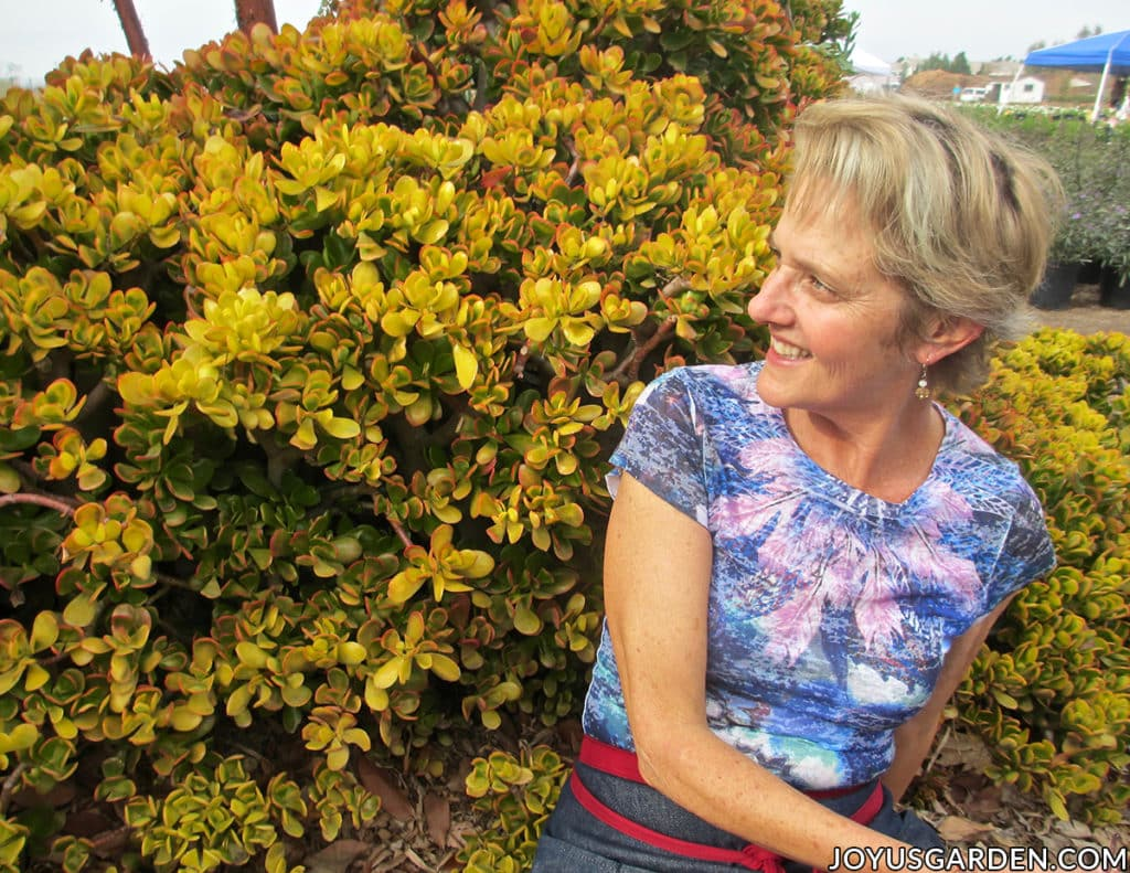 nell foster sits in front of a very large golden jade plant