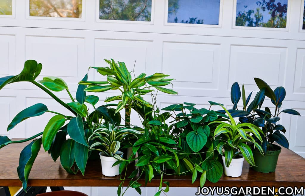 a variety of small tropical houseplants sit on a work table