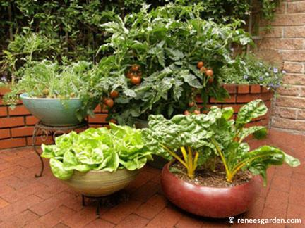 lettuce plants, carrots, chard & tomato plants grow in containers