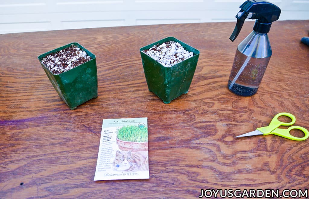 "2 4"" grow pots filled with mix sit on a work table with a packet of seeds a mister & scissors"