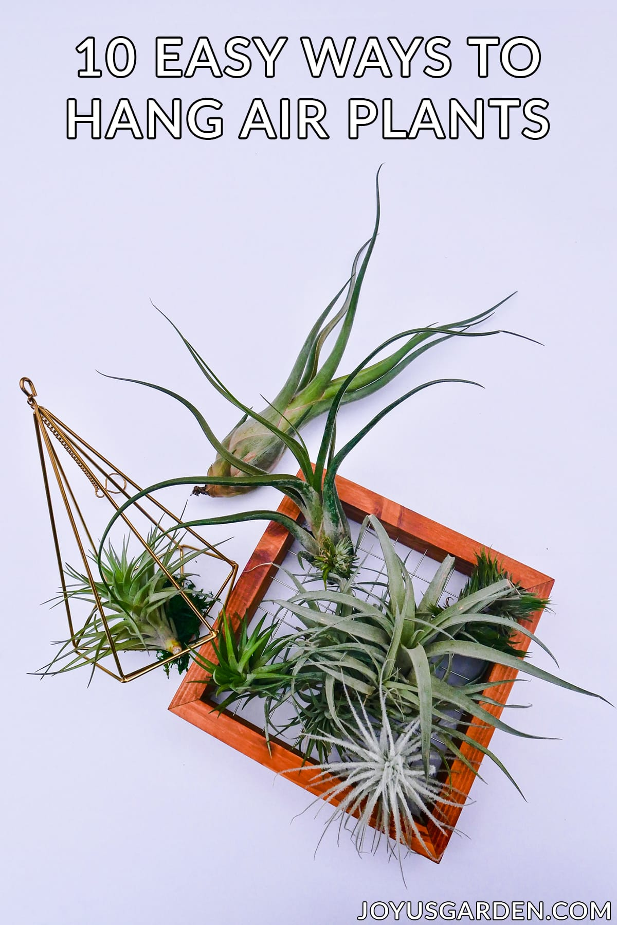 air plants displayed in a geometric hanger & a wooden frame the text reads 10 easy ways to hang air plants