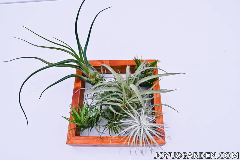 a variety of air plants are displayed on a wooden frame