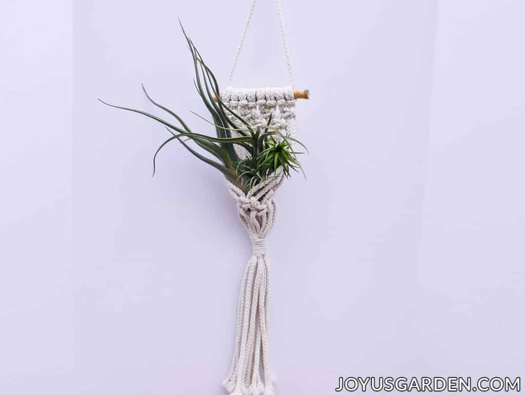 3 air plants are displayed in a wall macrame plant hanger