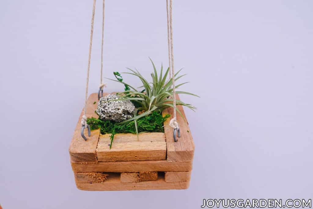 an air plant is displayed inside a hanging wooden orchid basket with moss & a piece of pyrite