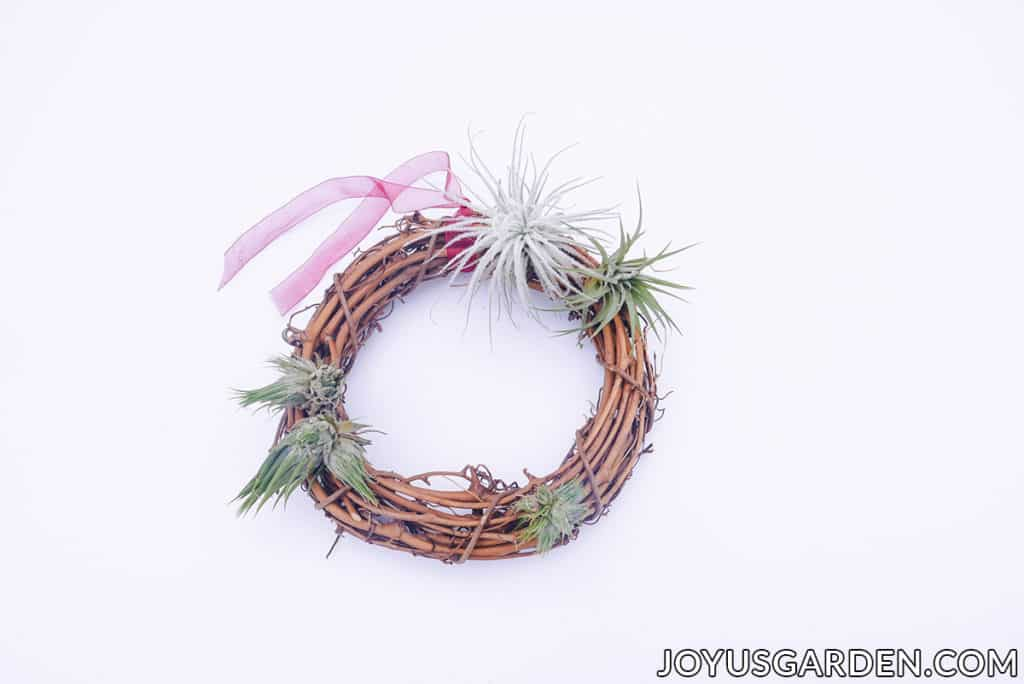 small air plants are displayed on a grapevine wreath