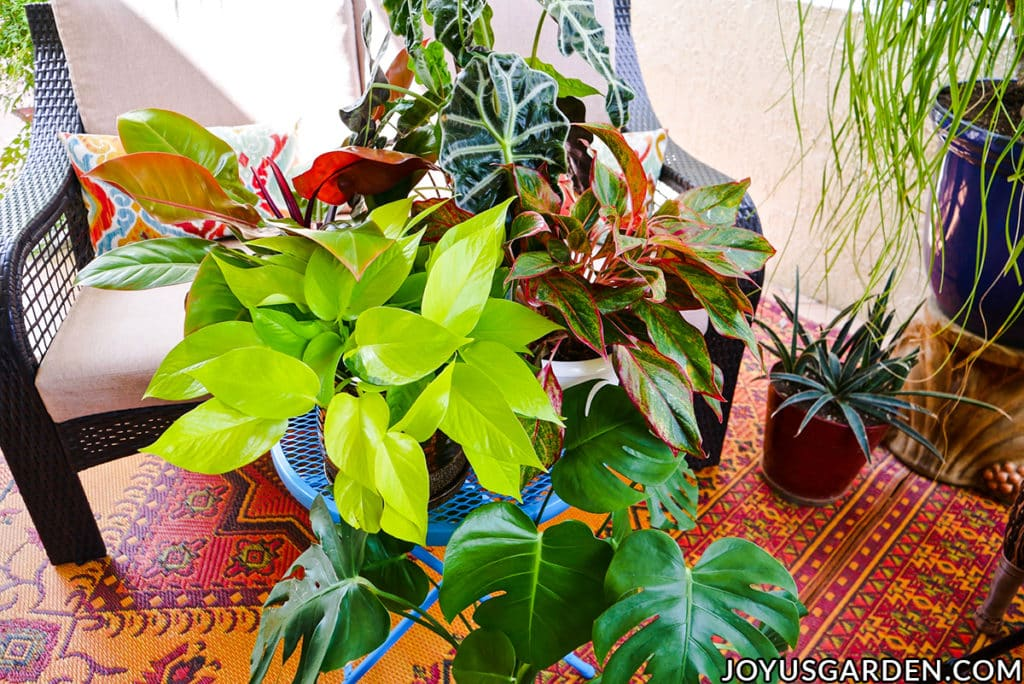 a grouping of beautiful houseplants sit on a patio table