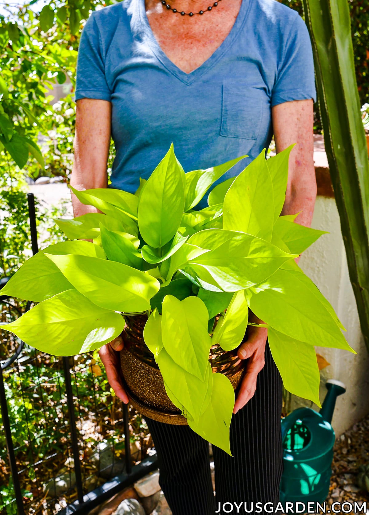 a woman in a blue shirt holds a vibrant chartreuse neon pothos