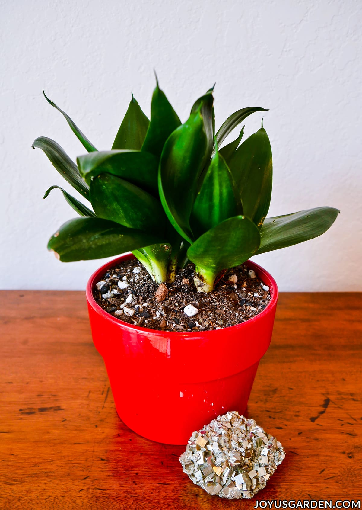a sansevieria hahnii jade grows in a red pot next to a piece of pyrite