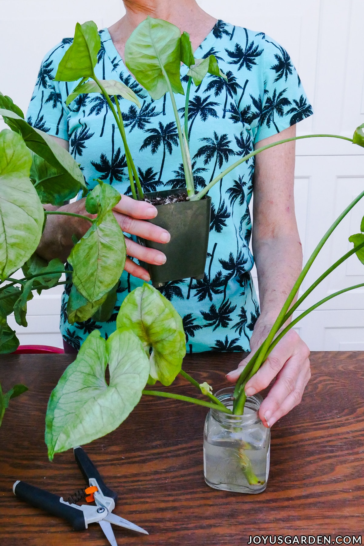 a woman in a pa woman holds a grow pot & a jar with water both containing arrowhead plant cuttings