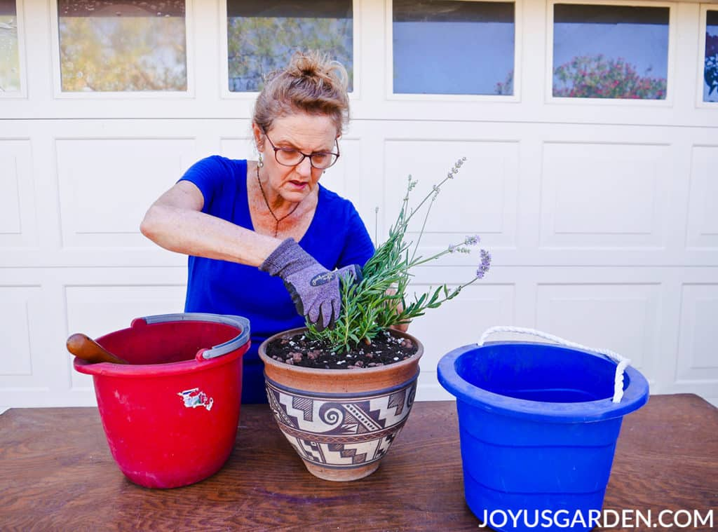 nell foster plants a lavender plant in a ceramic pot with a southwestern motive