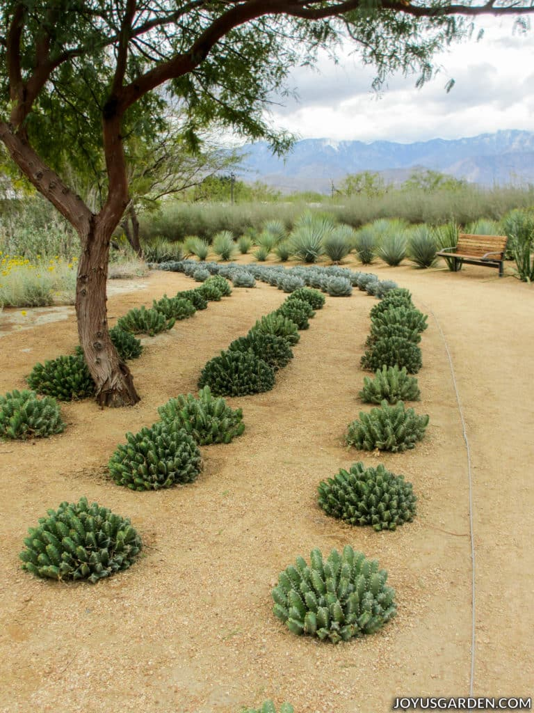a bench overlooking a cactus garden and trees with mountains in the background