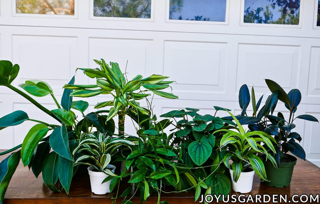 many different houseplants sit on a work table in front of a garage