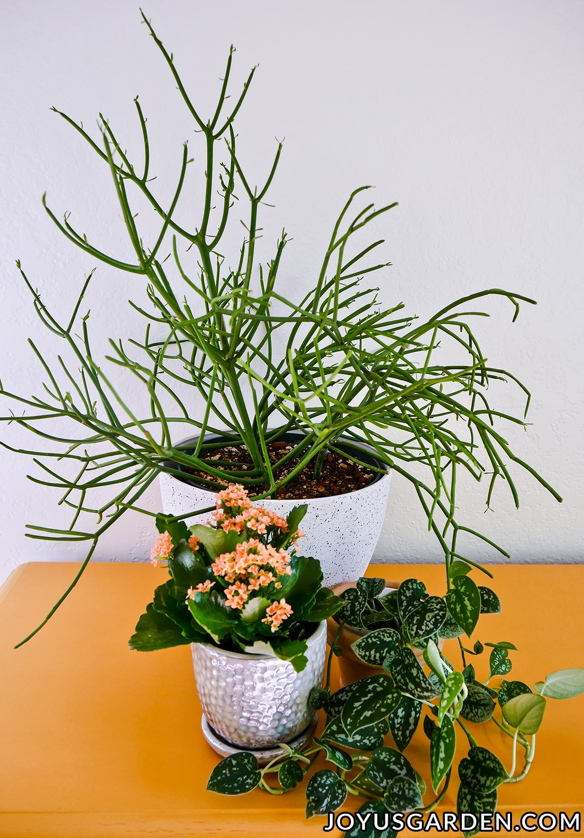 3 indoor plants sit on a yellow table