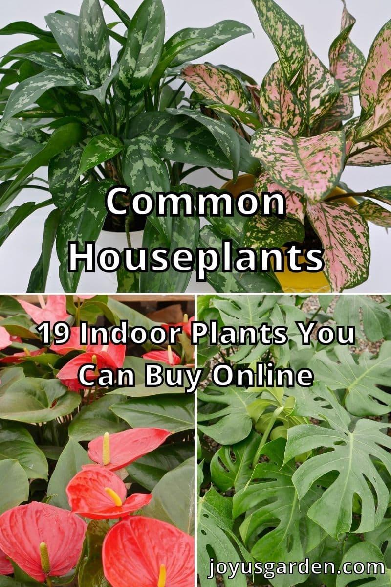 a collage with different houseplants the text reads common houseplants 19 indoor plants you can buy online