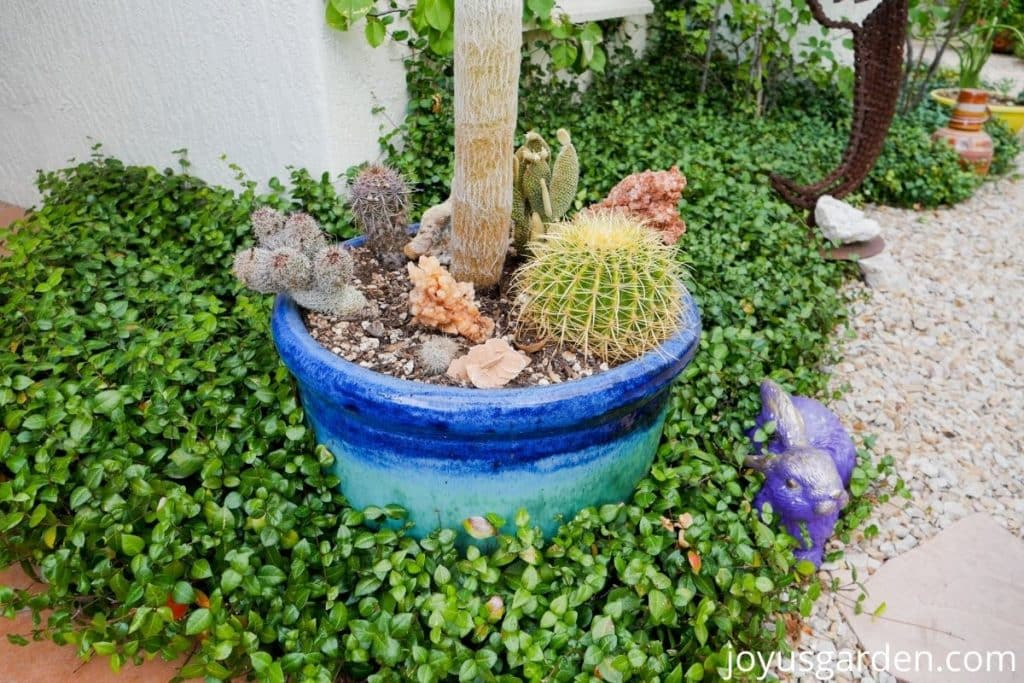 a mixed cactus planting in a blue ceramic container