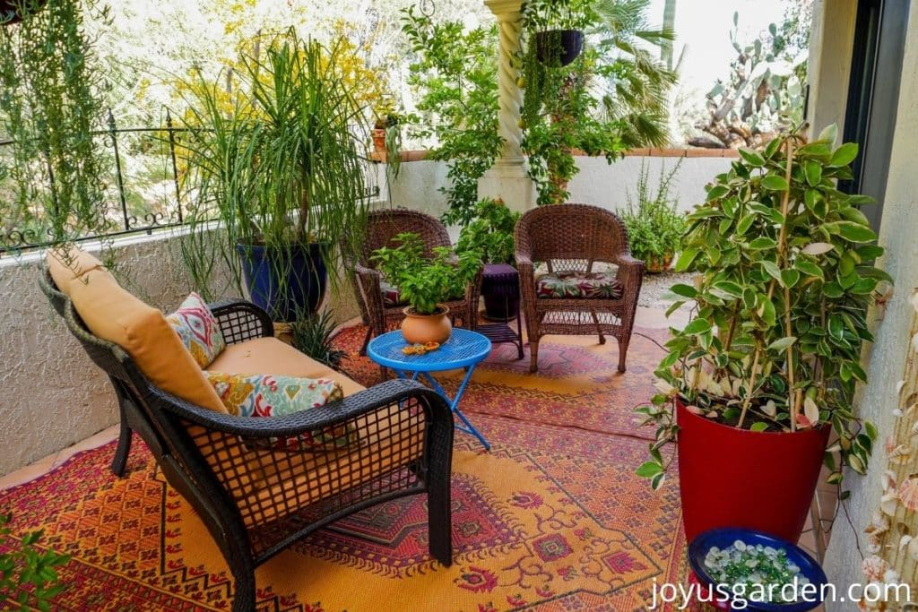 a beautiful patio garden in tucson arizona with many container plants
