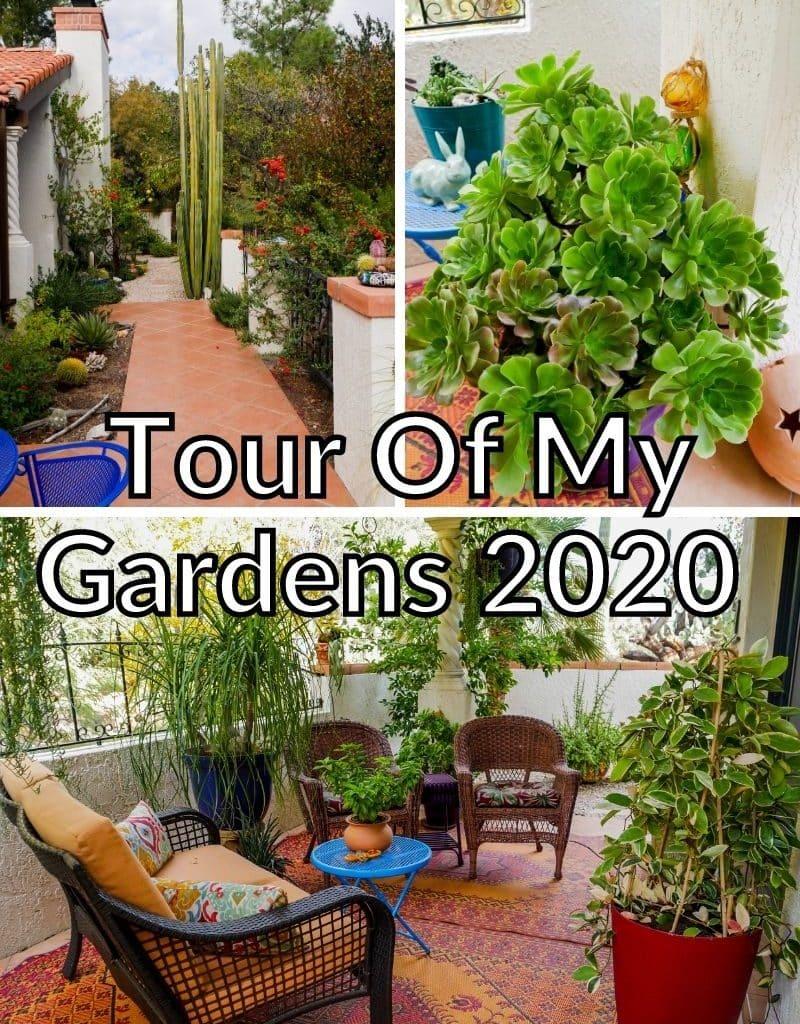 a collage consisting of 3 photos of a desert garden the text read tour of my gardens 2020